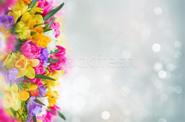 Abrótea flores fronteira cinza bokeh Foto stock © neirfy