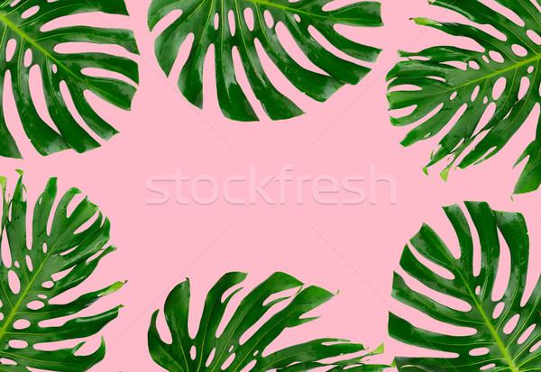Tropicales feuilles vertes cadre rose espace de copie texture Photo stock © neirfy