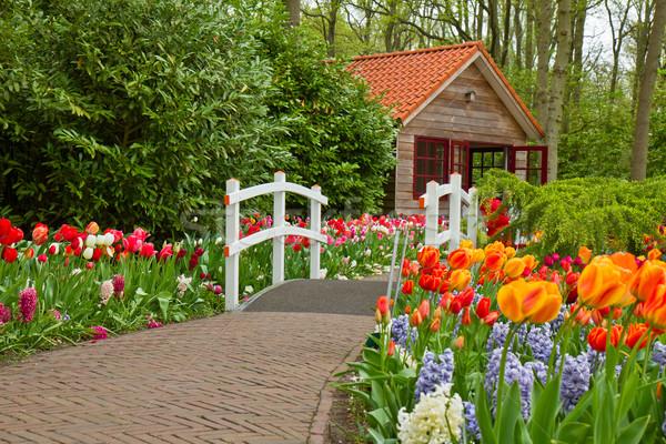 Cabana primavera flor da primavera jardim flores estrada Foto stock © neirfy