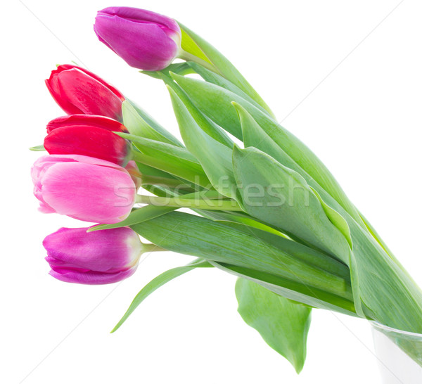 bouquet of  red and purple  tulip flowers Stock photo © neirfy