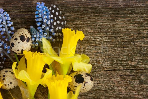 Narcissen eieren narcis bloemen veren bloem Stockfoto © neirfy