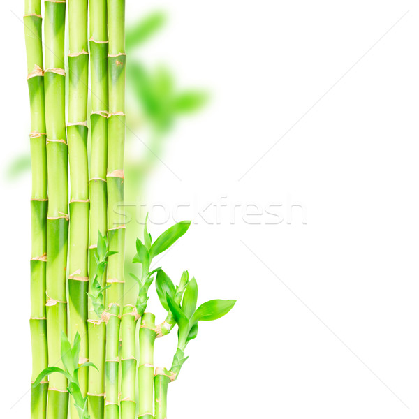 green bamboo stems Stock photo © neirfy