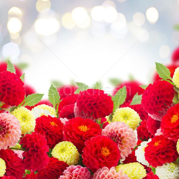 георгин цветы границе свежие копия пространства Сток-фото © neirfy