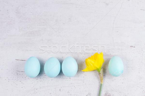 青 卵 スイセン 黄色 ストックフォト © neirfy