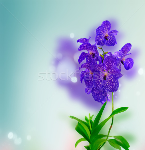 Blu orchidee fresche orchidea fiori Foto d'archivio © neirfy