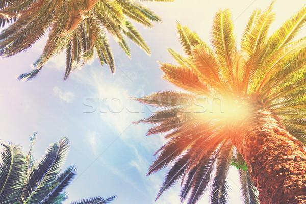 Tropische palmboom exotisch vers blauwe hemel retro Stockfoto © neirfy