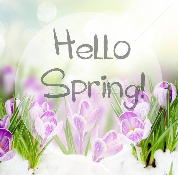 Stockfoto: Voorjaar · sneeuw · bloemen · tuin · bokeh · hallo