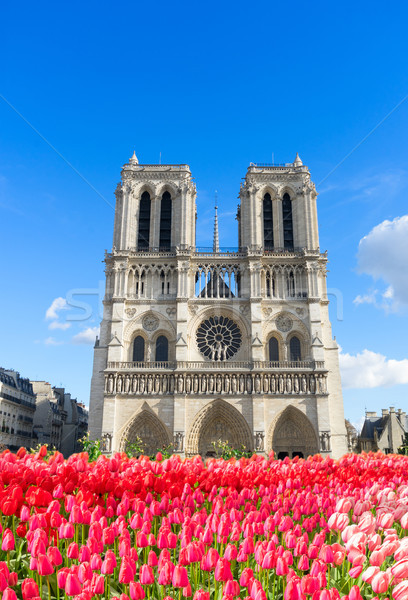 Fasada Katedra Notre Dame Paryż Francja kościoła wiosną Zdjęcia stock © neirfy