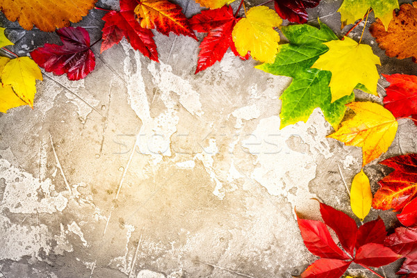 Natural fall leaves Stock photo © neirfy