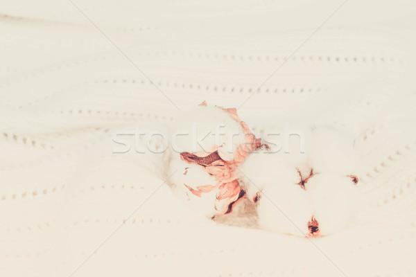 Greggio cotone texture bianco retro Foto d'archivio © neirfy