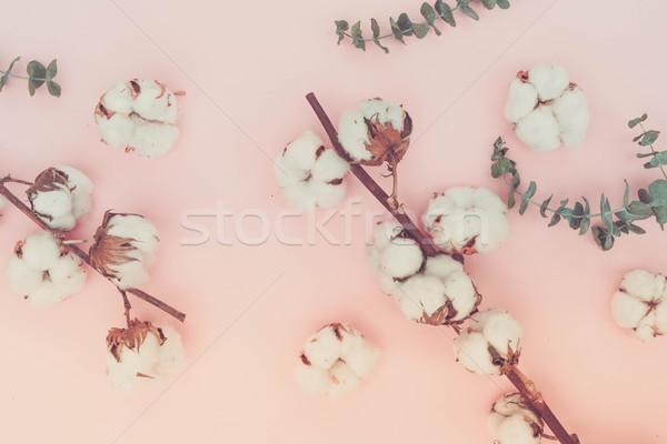 Cotton flowers with eucaliptus Stock photo © neirfy
