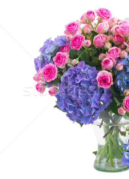 posy of  pink roses and blue hortensia flowers close up Stock photo © neirfy