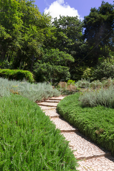 Tuinen Portugal houten pad water Stockfoto © neirfy