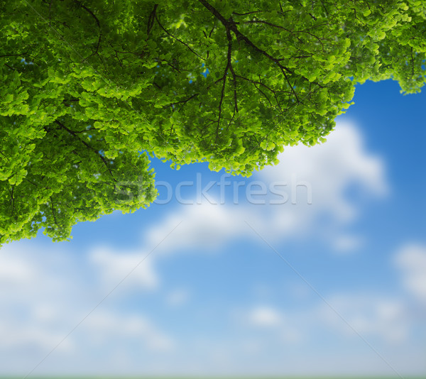 green oak leaves  Stock photo © neirfy