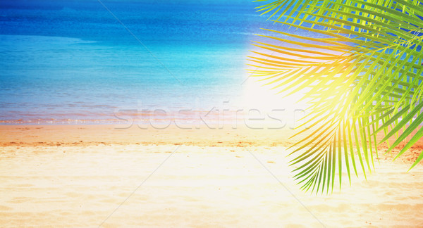 Stock photo: Summer beach with palms