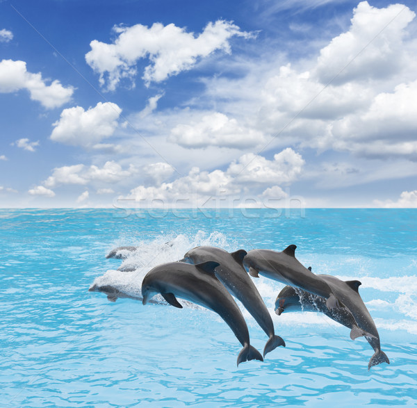 прыжки дельфин Pack дельфины красивой морской пейзаж Сток-фото © neirfy