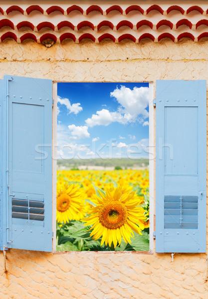 Napraforgók mező ablak ablakok kék redőny Stock fotó © neirfy