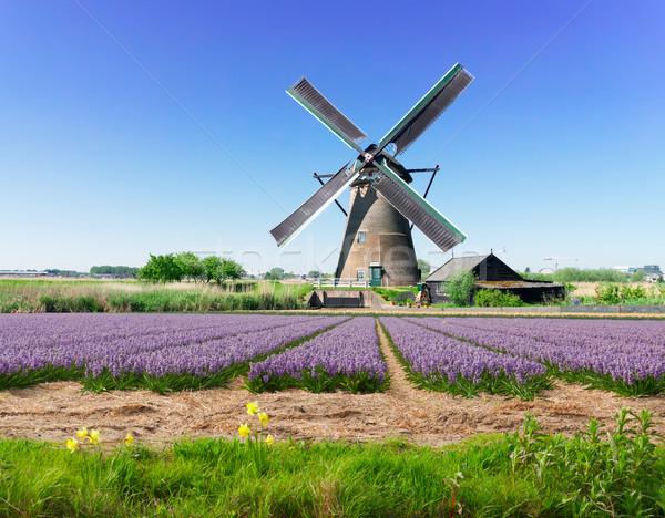 オランダ語 風 風景 伝統的な 風車 ストックフォト © neirfy