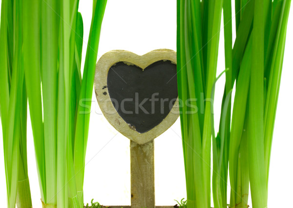 love to nature concept Stock photo © neirfy