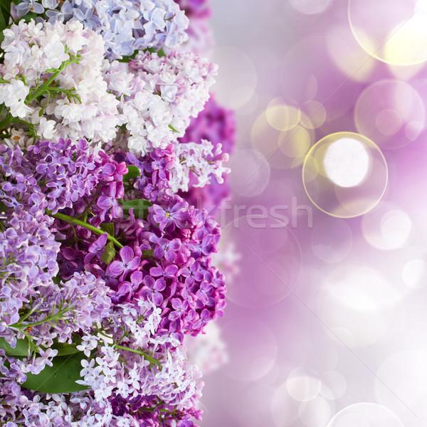 сирень цветы Пасху весны солнце Сток-фото © neirfy