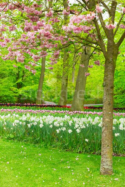 Voorjaar tuin holland kleurrijk groene gazon Stockfoto © neirfy