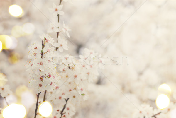 Spring bloom, retro toned Stock photo © neirfy