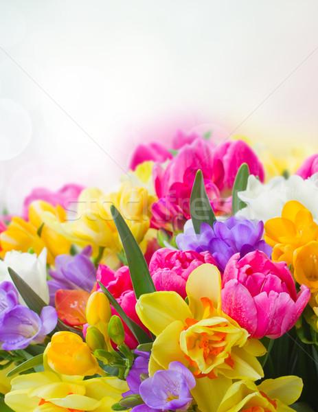 Stockfoto: Narcis · bloemen · grens · veelkleurig · Blauw · bokeh