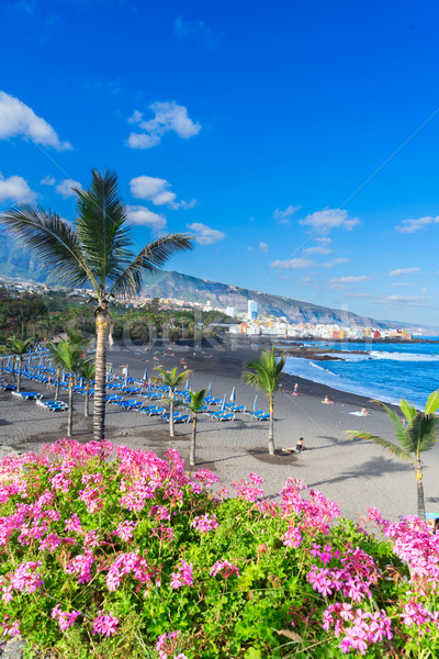 Puerto de la Cruz, Tenerife Stock photo © neirfy