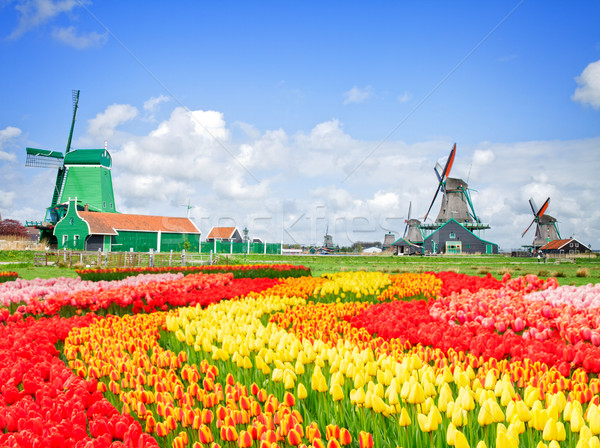 dutch windmills with in Zaanse Schans Stock photo © neirfy