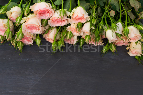 розовый роз свежие границе темно Сток-фото © neirfy