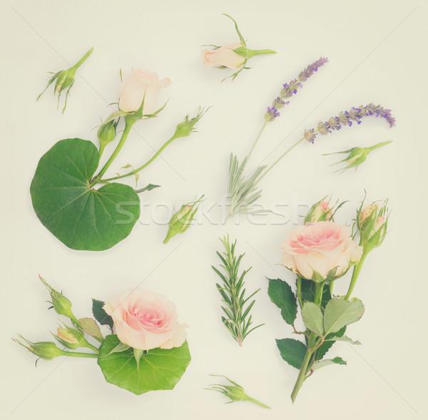 Jardim fresco flores folhas verdes padrão branco Foto stock © neirfy