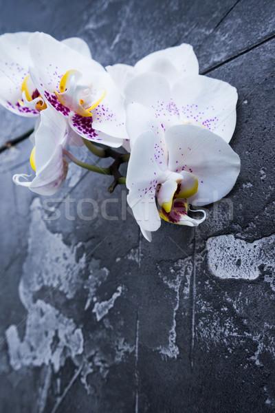 Fresche orchidee fiori fioritura ramo Foto d'archivio © neirfy
