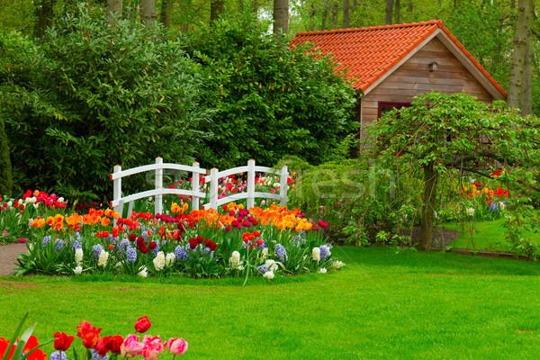 Kunyhó tavasz fű tulipánok virágágy tavaszi virág Stock fotó © neirfy