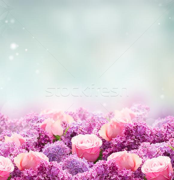 Gül çiçekler sınır mor pembe Stok fotoğraf © neirfy