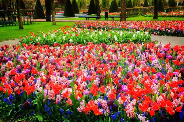 Formale primavera giardino colorato retro Foto d'archivio © neirfy