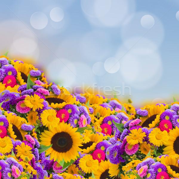 flowers garden with sunflowers Stock photo © neirfy