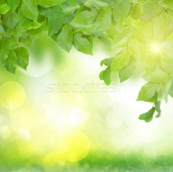 Zöld levelek napos idő tavasz kert nap fű Stock fotó © neirfy