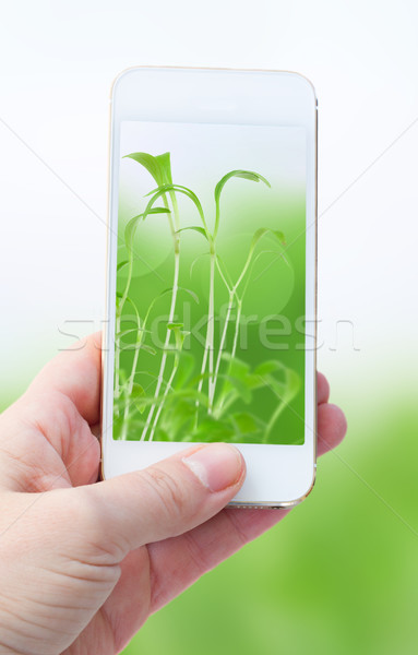зеленый природы женщину стороны Сток-фото © neirfy