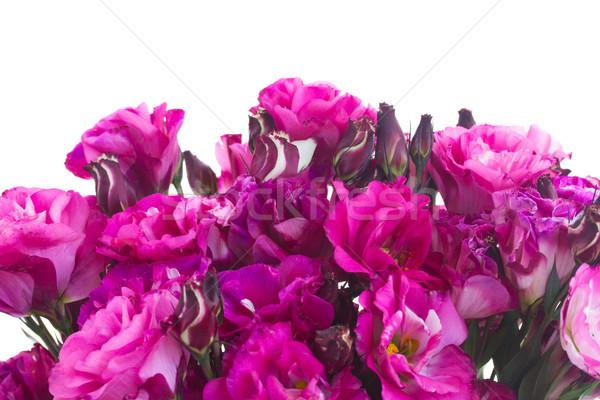 border of  mauve eustoma flowers Stock photo © neirfy