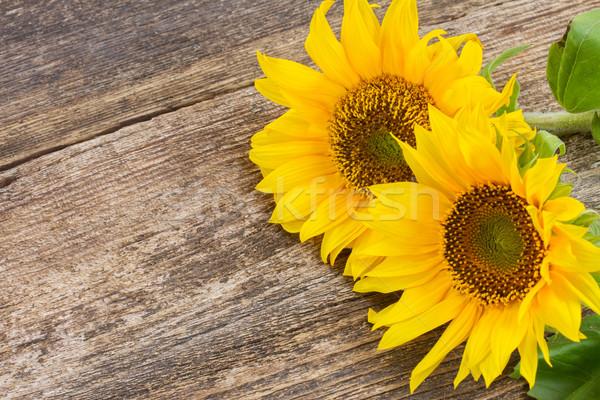 bright sunflower Stock photo © neirfy