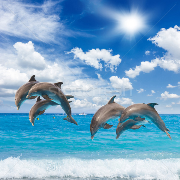 three  jumping dolphins Stock photo © neirfy