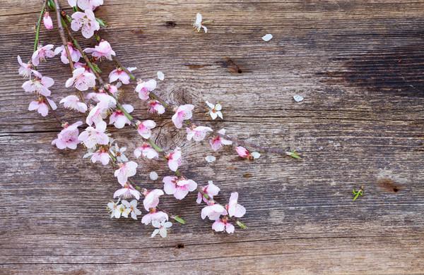 桜 花 新鮮な 小枝 ピンク ストックフォト © neirfy