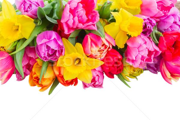 Boeket tulpen narcissen vers roze paars Stockfoto © neirfy