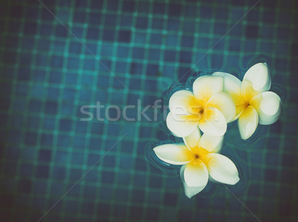frangipani flowers in blue water Stock photo © neirfy