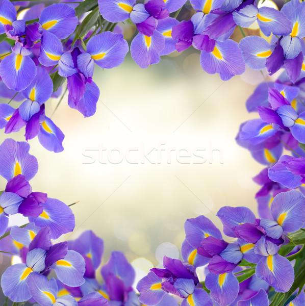 Сток-фото: синий · цветы · кадр · серый · bokeh