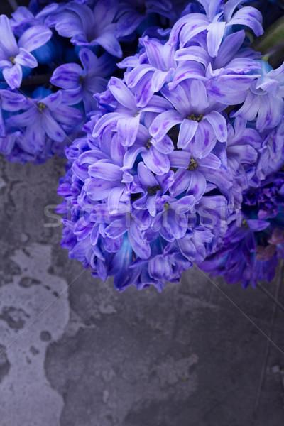 Sümbül taze çiçekler mavi Stok fotoğraf © neirfy