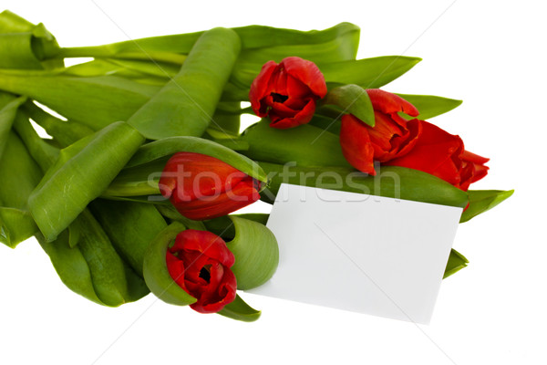 red tulips border Stock photo © neirfy