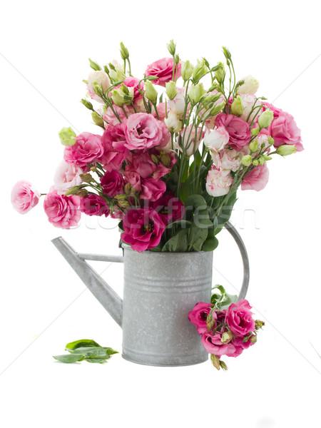 花 じょうろ 孤立した 白 春 自然 ストックフォト © neirfy