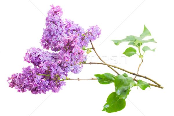 Stok fotoğraf: çiçekler · brunch · yalıtılmış · beyaz · Paskalya