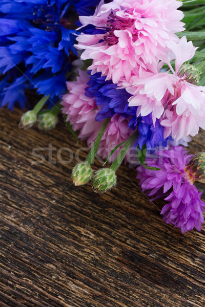 Blue and pink cornflowers Stock photo © neirfy